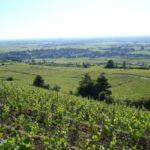 Sensation Vin De Corton au Montrachet