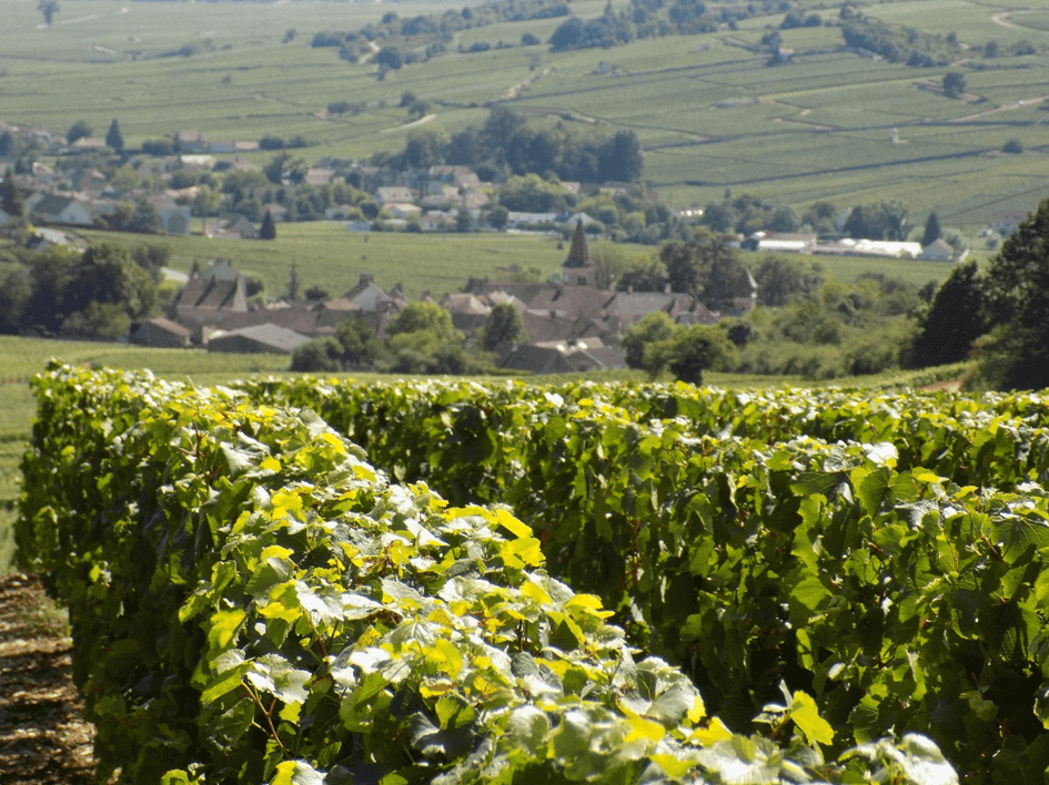 Sensaion Vin De Chambertin au Montrachet