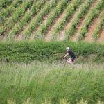 Sensation Vin, séjour en Bourgogne